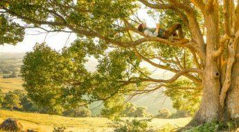 francesca-fontanella-psicologo-psicologia-e-arte-kandinsky-tree-e-albero-della-vita
