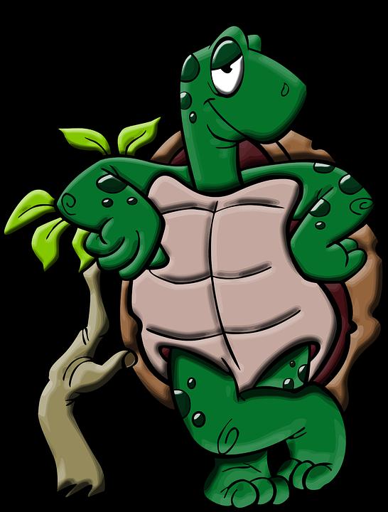 amphibian-1297728_960_720