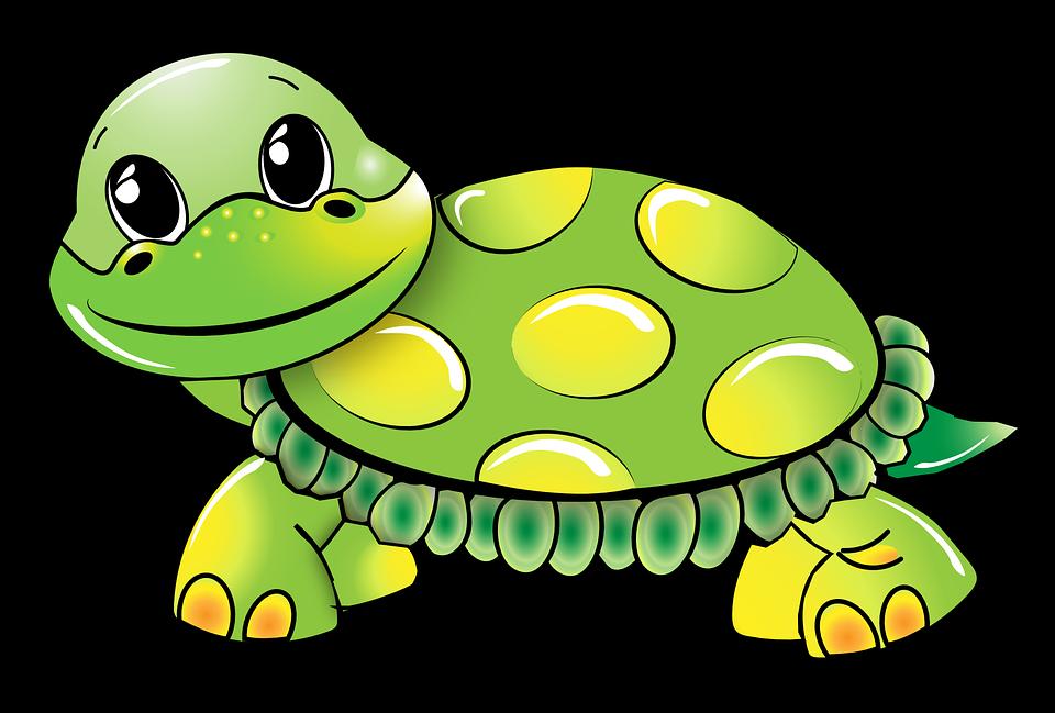 turtle-1021521_960_720