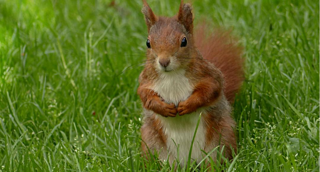 francesca-fontanella-psicologo-superare-le-difficolta-con-la-strategia-dello-scoiattolo